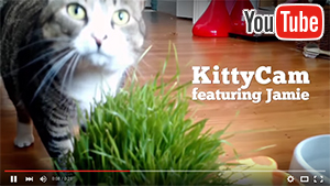 KittyCam on YouTube